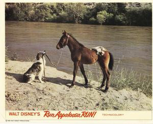 Run, Appaloosa, Run (1966) Lobby Card