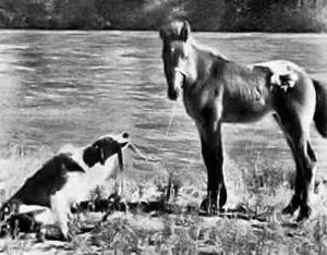 Run, Appaloosa, Run (1966) Still