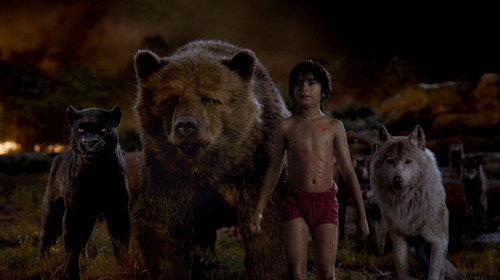 The Jungle Book Обои entitled The Law of the Pack