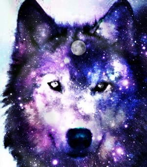 wolf icoon