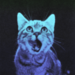 cats - cats icon