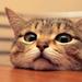 cute cat - cats icon
