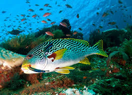 marine life1
