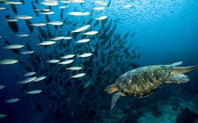 marine life2