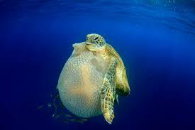 marine life3