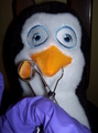 Afraid of the Dentist - penguins-of-madagascar photo