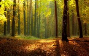 Autumn fondo de pantalla