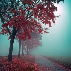 Autumn autumn 33155585 400 400