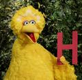 Big Bird (2004-present) - big-bird photo