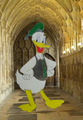 Donald ente in Slytherin