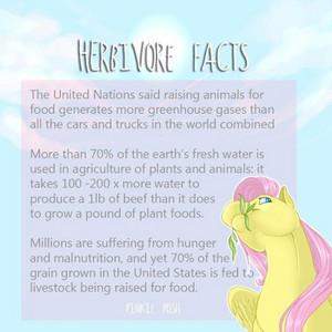 Herbivore Facts