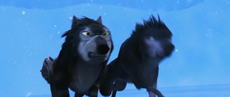 alpha und omega bilder king and unnamed wolf hd hintergrund and