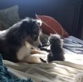 Kitten and Dog - random photo