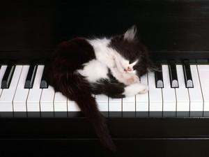 Kitten on a पियानो