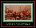 Merry Christmas  - sam-sparro photo
