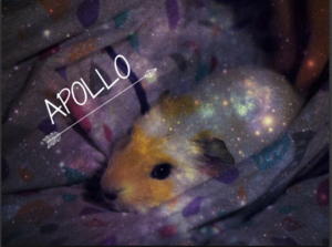 My edited चित्र of Apollo