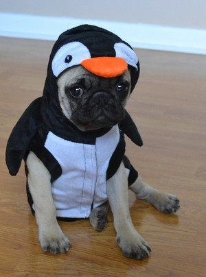 Pug पेंगुइन हैलोवीन Costume