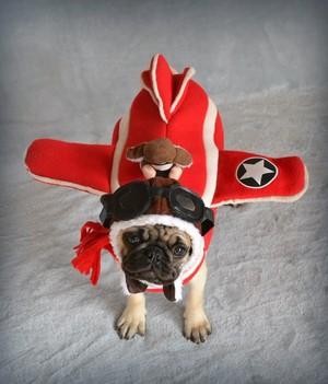 Pug Pilot Plane