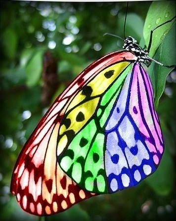 Butterflies wallpaper entitled Rainbow Butterfly
