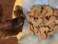 Squirrel cookies