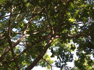 белка in дерево