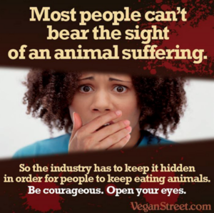 Suffering Animals