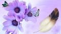 Violet Daisy And Butterflies - butterflies photo