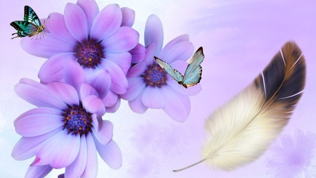 Violet Daisy And Butterflies