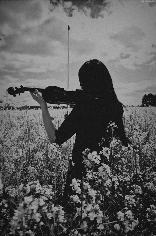 Owleyes1316 Images Violin HD Wallpaper And Background Photos
