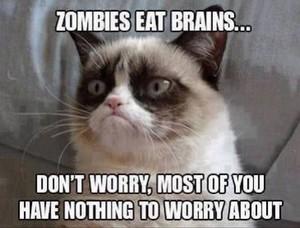 grumpy cat mean memes original