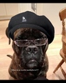 jus something funny I seen  - samuel-l-jackson photo