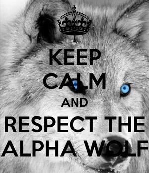 keep calm and respect the alpha নেকড়ে