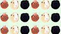 tumblr piggies wallpaper - guinea-pigs photo