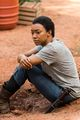 7x05 ~ Go Getters ~ Sasha - the-walking-dead photo