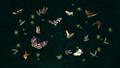 Butterflies, Moths, and Fireflies - butterflies wallpaper