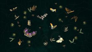Butterflies, Moths, and Fireflies