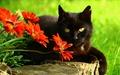 Cat - cats photo