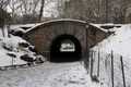 Central Park, New York in Winter - new-york photo