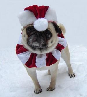 Weihnachten Santa Pug