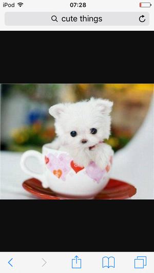 Cute puppie 🐶🙈