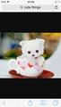Cute puppie 🐶🙈 - cute-puppies wallpaper