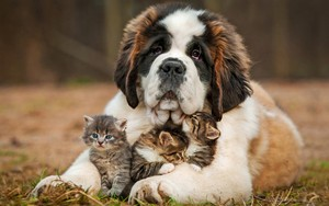 Dog and Kitttens