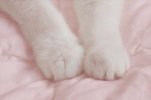 Kitty paws <333