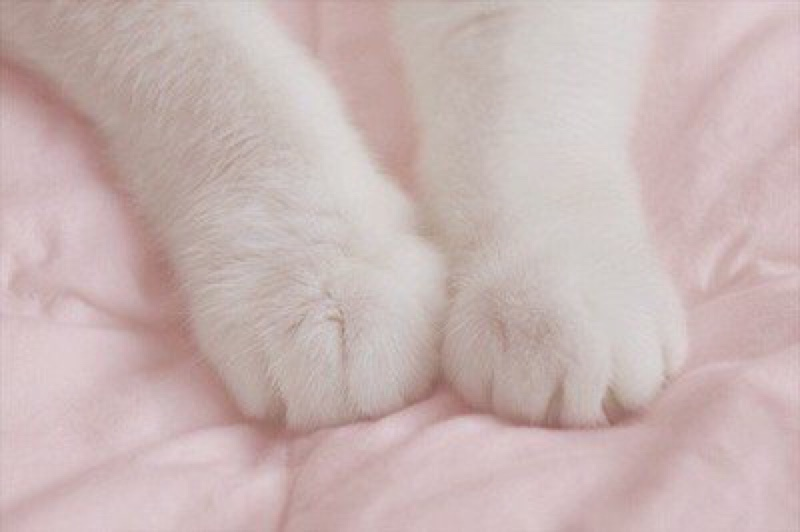 Rainbow Unicorn Images Kitty Paws 333 Hd Wallpaper And Background