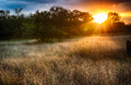 McKinney Falls State Park at Sunset - texas photo