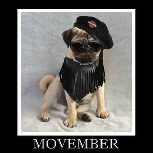 Movember Pug