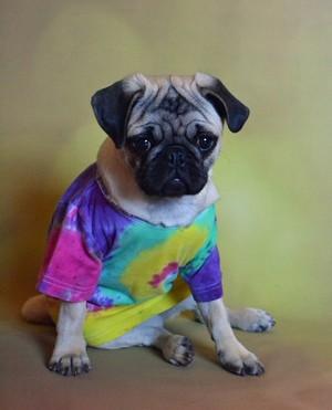 Peace Pug