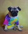 Peace Pug - pugs photo