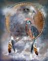 Spirit Of The Hawk by Carol Cavalaris