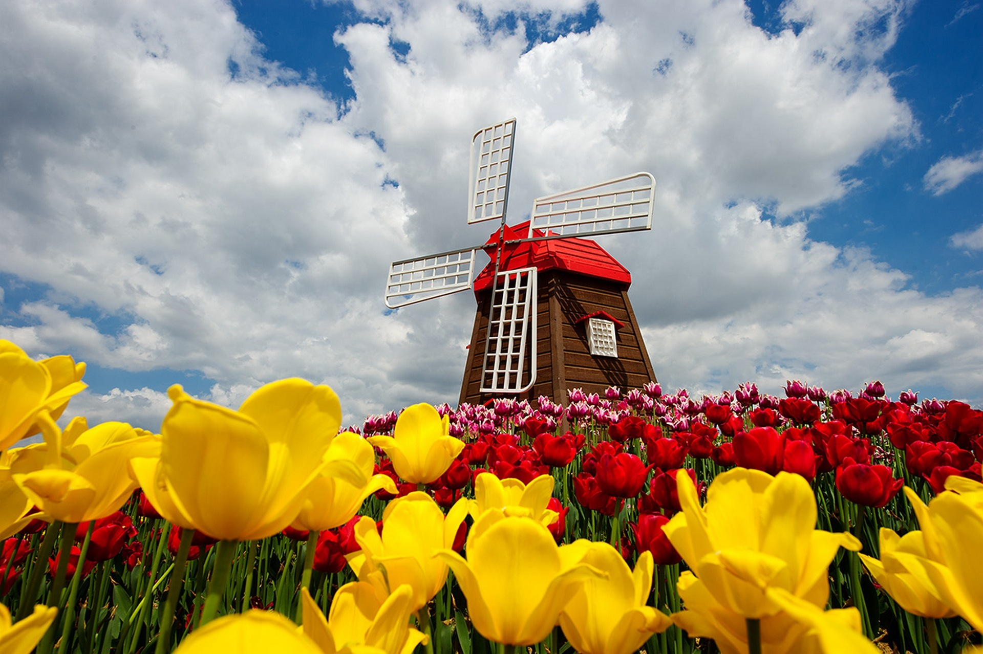 Windmill and Tulips.